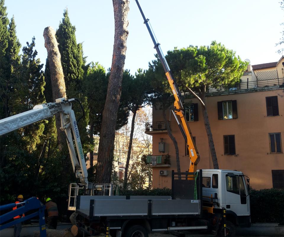 Potatura degli alberi a grosso fusto